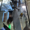 Taxidermy in Motion, (not) from a Bird's-eye Perspective
